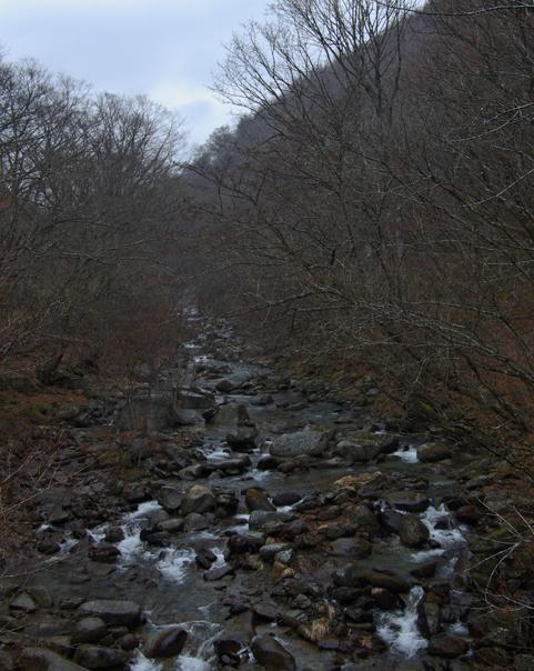 20090404fuefuki
